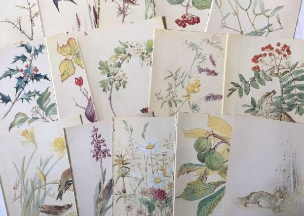 Nature Notes of an Edwardian Lady - 5 Book Pages
